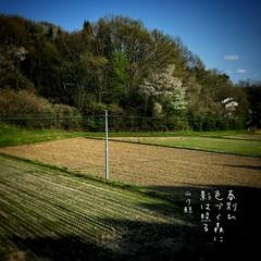 春別れ 色づく森に 影は照る[山乃鯨] #haiku #photohaiku #poetry #spring #micropoetry #春 #フォト俳句 #Japanese #写真俳句 #俳句 #snapseed #phonto #jhaiku #mpy #vss #3lines #poem #shortpoem #verse #actuallyautistic #autisticpoetry #失恋 #恋歌 #恋俳句 #love (Atsushi Boulder) Tags: heartbreak brokenheart 季語 五七五 photo photography literature japan 575 haiku photohaiku poetry spring micropoetry 春 フォト俳句 japanese 写真俳句 俳句 snapseed phonto jhaiku mpy vss 3lines poem shortpoem verse actuallyautistic autisticpoetry 失恋 恋歌 恋俳句 love