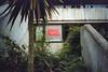 (ニノ Nino) Tags: kodak farbwelt 200 expired film 35 mm 35mm analog analogue olympus mju ii merry christmas palm tree trees