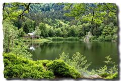 Lacs des Grand et Petit Neuweiher (jamesreed68) Tags: neuweiher lac lake eau water forêt alsace 68 hautrhin grandest nature paysage canon eos 600d france oberbruck refuge