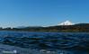 Lago Villarrica (fernando-a-s) Tags: aves birds naturaleza nikon patagonia chile volcano villarricavolcano