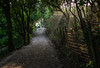 Breaking Through (Shastajak) Tags: fencefriday fence track rocklandslane sunshine sunrays light shadows gate