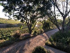 Sunrise View (RobW_) Tags: sunrise view jordan wine estate stellenbosch western cape south africa monday 19mar2018 march 2018