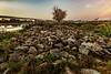 Mückenbusch (karstenlützen) Tags: germany brandenburg oderland lebus mückenbusch morning stones tree riverside sigma1020f35 ilca77m2 sonyflickraward