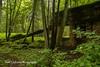 Bunkers at Wolf's Lair, Poland (Anna Calvert Photography) Tags: poland polska forest trees nature landscape wolf'slair hitlers lair nazi bunkers secondworldwar german gierloz ketrzyn