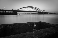 By building bridges, beautiful things can grow, even at the most ugly and uncommon places. (Rob Schop) Tags: rose wideangle nd64 sonya6000 flower nederland f11 brug sunset longexposure hoyaprofilters vanbrienenoordbrug rotterdam monochrome hoyafilters pola maas samyang12mmf20 city manfrottoled900ft a6000 blackandwhite le bridge