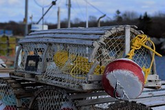 Lobster Traps (jonfromnsca) Tags: lobstertrap terencebay novascotia fishery buoy rope netting coil harbour port inshore frame hoop laths baitbag escapevent parlor kitchen head hatch
