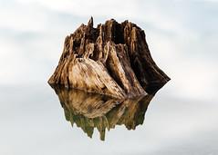 Stumped (Or Something Like That) (John Westrock) Tags: treestump reflection longexposure rattlesnakelake minimal calm nature pacificnorthwest washington canoneos5dmarkiii canon135mmf2lusm bwnd1000x