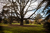 Trees (alvis2603) Tags: trees gardens royalbotanicgardens