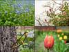 Even more naturey crap (Geza (aka Wilsing)) Tags: natureycrap flowers nature em1 voightlandernokton25mm095