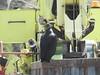 Black Vulture (FluvannaBirder754) Tags: columbia blackvulture vulture birdwatching bird birding birder birds virginia yellow machinery wildlife nature outdoor outdoors outside animal creature fluvanna fluvannacounty