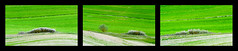 Bush triptych (SLpixeLS) Tags: italy italie tuscany toscane toscana landscape paysage soil agriculture design abstract texture ondulation undulation wave vagues bush buisson herb herbetriptych art