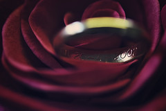 110/365: Anniversary (Liv Annette) Tags: marriage anniversary weddingband ring rose flower pink love husband wife