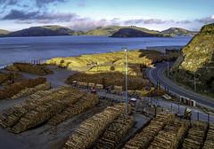 South Island product (Tony Tomlin) Tags: portchalmers newzealand lumber wharf harbour port ocean sea logs wood trucks