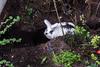 Folge dem weißen Kaninchen.... (hwl.weber) Tags: nikond750 fx köln garten hasen graben outdoor