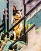 #trippy #lsd #cats #gatos #smartphonephotography #postproduction #photoedit #photomanipulation #pets (Shen-Lung) Tags: photoedit pets cats trippy gatos photomanipulation smartphonephotography postproduction lsd