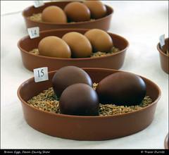 Brown Eggs, Devon County Show 2014 P1010456 (Trevor Durritt) Tags: ©trevordurritt panasoniclumixdmcg3 availablelight m43 microfourthirds eggs devoncountyshow england english devon panasoniclumix1442mmf3556asphois