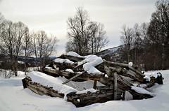 gammelt sommerfjøs (KvikneFoto) Tags: åsta katt cat vinter winter snø snow kulturlandskap tamron nikon