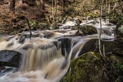 2018-04-03 PG-1390254.jpg (Hands in Focus) Tags: woodland derbyshire moss lumixfz1000 peakdistrict water padleygorge burbagebrook