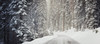 Into the Snowy Woods (Brady Baker) Tags: california sequoia national park usa travel adventure snow weather blizzard highway road path transportation trees forest nature outdoor winter march seasonal treacherous majestic slippery beauty