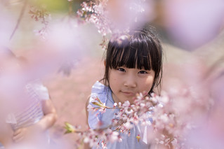 Little girl looking up at camera through cherry blossom