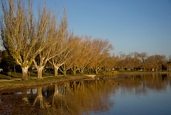 Its nearly winter (bobarcpics) Tags: lake ballarat countryvictoria reflections trees lakewendouree autumn
