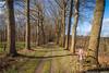_kalte_windige_sonne (l--o-o--kin thru) Tags: cycling gravelbike winterswijk achterhoek allee