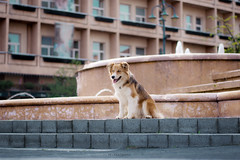 Dash in the city centre (tamaratelkesphotography) Tags: dog bordercollie puppy cute water city citycentre hotel nikon 50mm dogportrait spring hungary