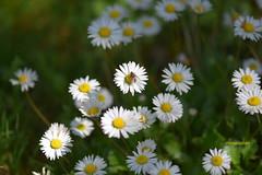 .... GIUGNO ... (EXPLORE) (Fulvia e Gabriele : ) ....) Tags: natura fiori animali casa gessate