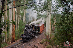 Tyers Valley Time Machine (R Class Productions) Tags: steam train puffing billy railway dandenong ranges victorian railways narrow gauge climax locomotive 1694 timber tramway geared vintage heritage forest smoke