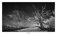 Mirador de San Martín (Jose Antonio. 62) Tags: spain españa cantabria liébana arboles trees nubes clouds bw blancoynegro blackandwhite snow nieve naturaleza nature