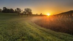 Misty sunrise (Sebo23) Tags: sun sunrise sunrays sunbeams sonnenaufgang sonnenstrahlen morning morgennebel morninglight landscape natur naturaufnahme nature canon16354l canon6d