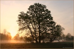 Als im Jahre ... (der bischheimer) Tags: spreewald sonnenaufgang baum tree nebel dunst fog mist canon derbischheimer brandenburg lausitz