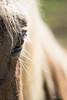 ...et moi...!   -   ...and me...! (minelflojor) Tags: cheval yeux crinière cils poil tête horse eyes mane eyelashes hair head
