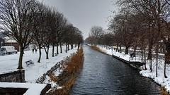 Grand Canal (Raúl Alejandro Rodríguez) Tags: grand canal nieve snow nevando snowing bancos benches árboles trees agua water frio cold freeze dublin irlanda ireland