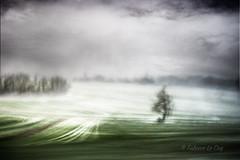 Gouttes de froid (Fabrice Le Coq) Tags: ciel eau neige paysage arbre vert blanc nuage