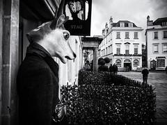 Stag Party (Feldore) Tags: bath stag shop strange head disturbing england english surreal odd