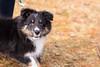 _DSC0649.jpg (karin27) Tags: portland dog baxterpines zeb isla maine elin puppy