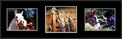 Hop, à cheval pour une belle semaine... (Save planet Earth !) Tags: cheval horse animal friend ami amcc collage