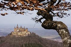 Burg Hohenzollern am Zeller Horn (Lilongwe2007) Tags: deutschland badenwürttemberg hohenzollern burg aussicht zeugenberg albtrauf aussichtspunkt buchen bäume blätter herbstlaub gebirge berge