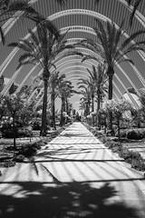 L'Umbracle B&W (giorgiobattera) Tags: city valencia lumbracle blackwhite shadows travel architecture park