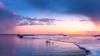 Swans 2 (Joni Salama) Tags: lauttasaari eläimet luonto auringonlasku jää talvi lintu valo joutsen meri helsinki suomi vesi uusimaa finland fi animals nature ice winter bird swan light