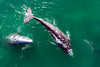 Whales and Dolphins (pbuschmann) Tags: malibu california unitedstates greywhales whale migration dolphins pacific ocean busy pointdume