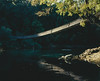 (Cristóbal Marambio) Tags: fujifilm mediumformat 富士フイルム 中判カメラ filmisnotdead ishootfilm fuji mamiya fujifilmxus fujifilmeu chile mamiya7 film analogfeatures 6x7 light analogue provia mc1r analoguefeatures mamiyaleaf medioformato slide iphonex iphone8plus iphonetouch explore nature filmphotography flickr show bridge hanging suspension