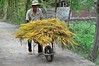 A farmer's work is never done (Roving I) Tags: farmers wheelbarrows loads transport rice stalks sunhats lanes tamky workers villages vietnam