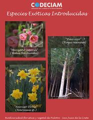 Especies exóticas introducidas