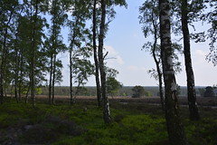 zilvensche heide_D719646 (Vogelmelk) Tags: veluwe bos natuur nature nederland gelderland gelderslandschap loenermark