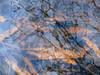 between earth and sky (vertblu) Tags: pond pondlife pondsurface pondscene bythepond moulderingleaves leaves leafdebris water watersurface waterabstract reflection reflections reflectedskies reflectedtwigs reflectedclouds reflectedaldertwigs mirroring mirrored abstraction abstract abstrakt abstractnature abstracted abstractfeel almostabstract distorted distortion underwater underthewater inthewater onthewater bluewater brown bluebrown vertblu natureabstracted abstractreflections diagonal ripples rippling