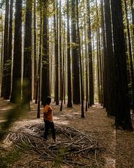 warburton redwoods-2 (brody_d_webb) Tags: warburton redwoods nature adventure victoria melbourne forest autumn olympus explore