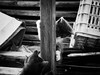 3961 - Playing (Diego Rosato) Tags: tito bruto gatto cat gattino kitten animale animal pet fuji x30 rawtherapee bianconero blackwhite game playing gioco