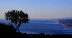 seascape (robertoburchi1) Tags: seascape landscape sea paesaggio colours colori trees alberi